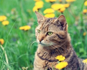 Allergies to Cat Fur- Cat Allergies symptoms and treatment