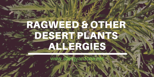 Desert Plants Causing Havoc for Arizona Allergy Suffers