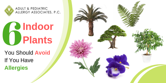 6 Indoor Plants To  Avoid If You Think You Have Allergies