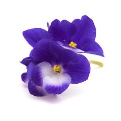 African-Violet-Blossoms