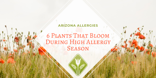 Arizona Allergies: 6 Plants That Bloom During High Allergy Season